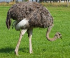 The Ostrich World