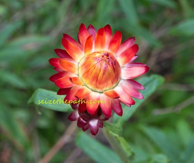 Fiore-rossologo
