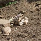 The Prairie Dogs