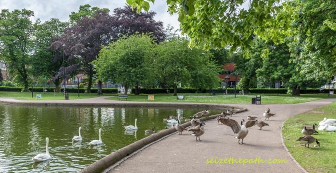 Duckslow